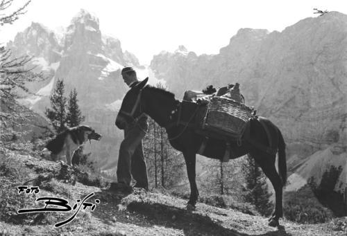 423 - mulo e cane